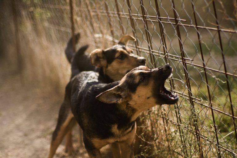 Dog Bites - Rockford Personal Injury Lawyers: Marriett and Murati